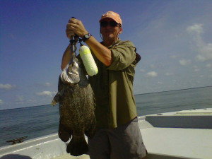 charleston-triple-tail-fish-image14
