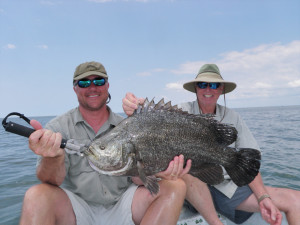 charleston-triple-tail-fish-image5